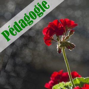 Pédagogie
